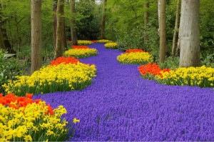 cvetovodstvo-(2)