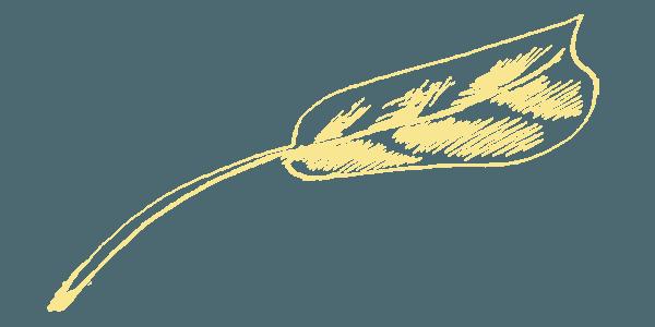 Бланк Земельной Декларации