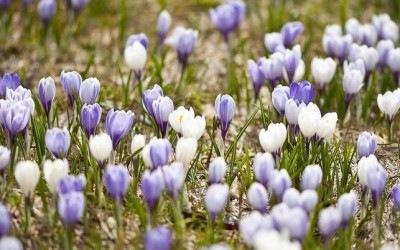 Весенний хоровод природы